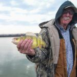 Lake Erie Perch 2
